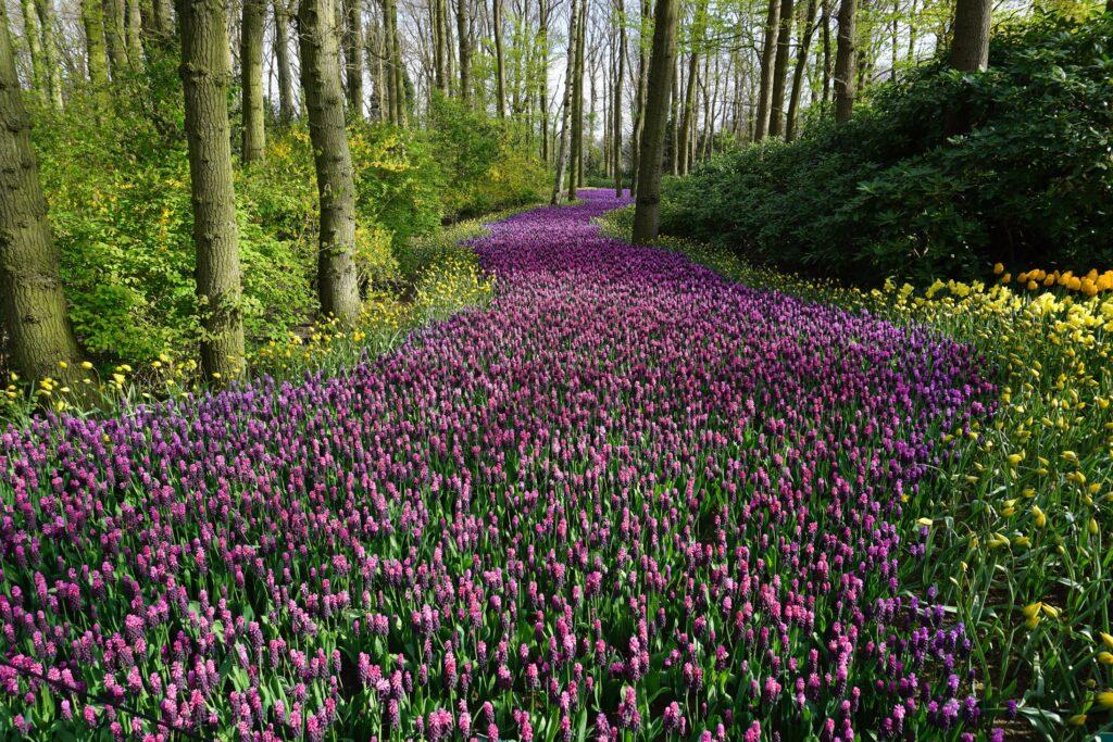 Flower field in the woods